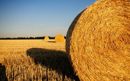 close up of a hay bale in field