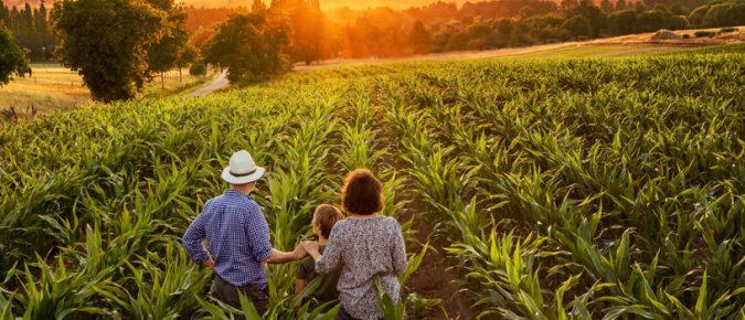 Farm asset division a 21st-century conundrum