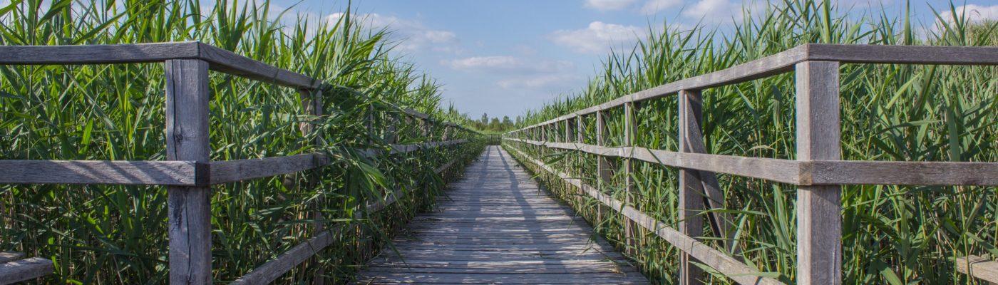 a boardwalk intersecting a field