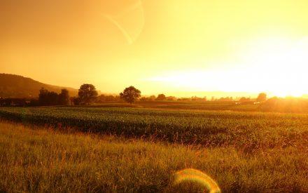 a sunset over a farm field
