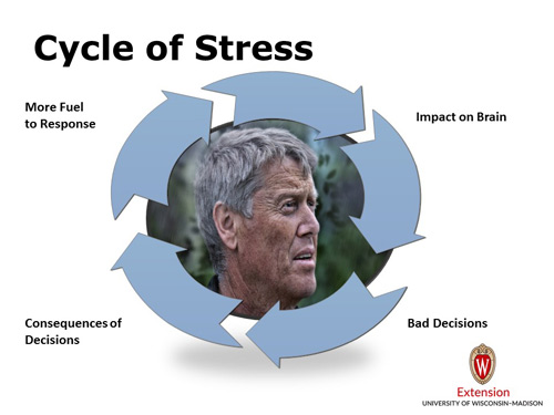 Cycle of Stress
