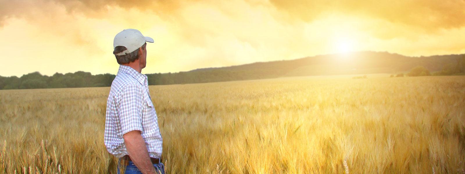a farmer in a field watching the sun set
