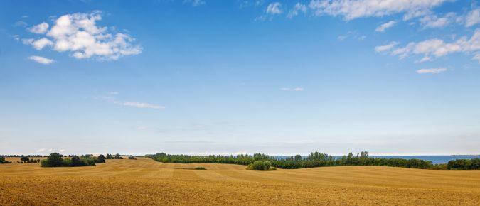 Seasonal Grain Price Patterns