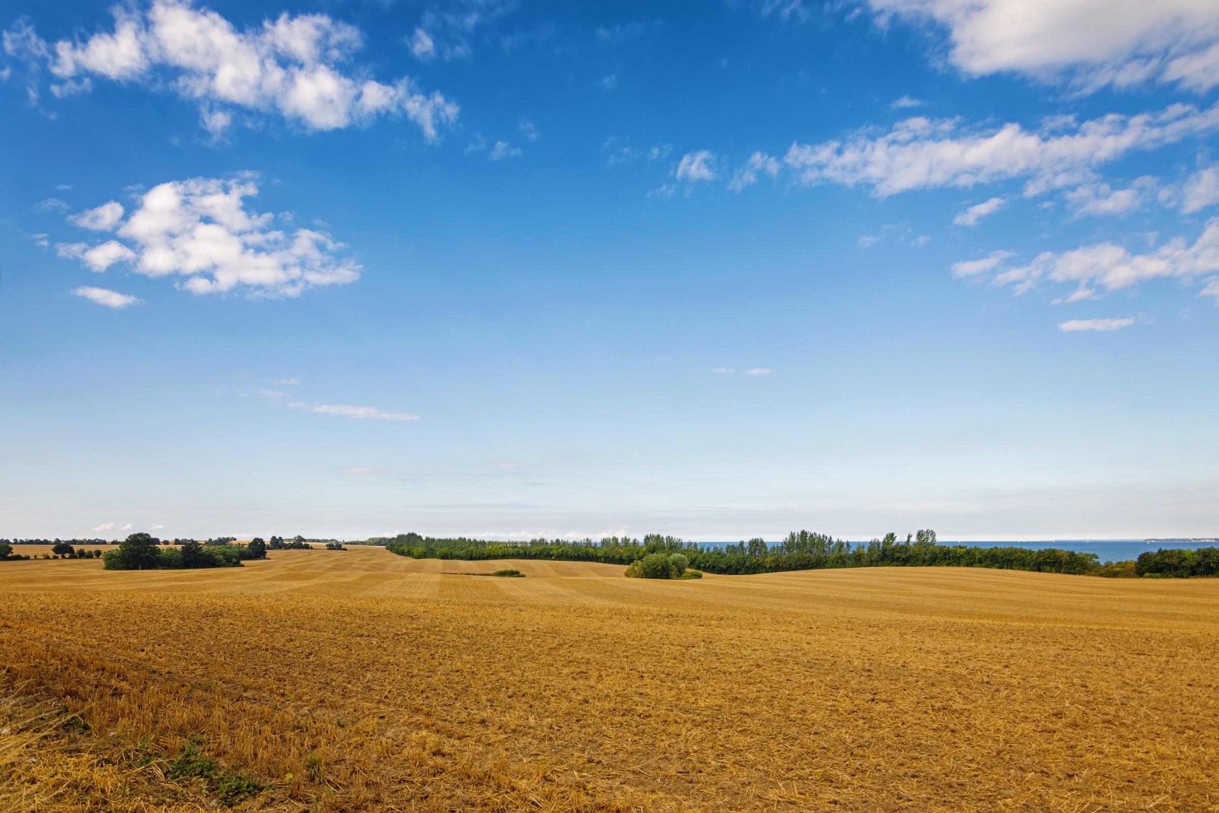 a field under a bright blue sky