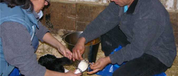 Building a Positive Farm Business Culture: Characteristics of Latin/Hispanic dairy workers