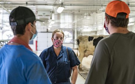 Two men talking with a woman in a dairy barn. All three people are wearing masks covering their mouths.