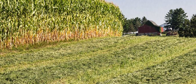 Tools for Pricing Standing Corn Silage