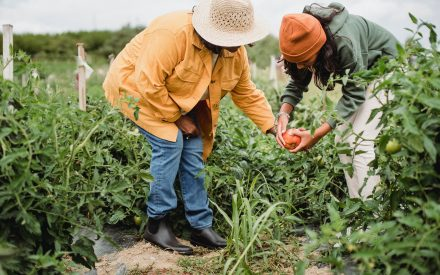 Grant-writing Workshops for Farmers